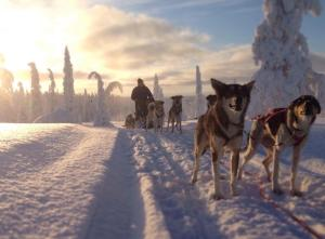 Husky Hut, Case vacanze  Ivalo - big - 11