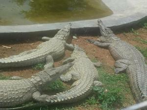 Elmolo Crocodile Park and Lodge