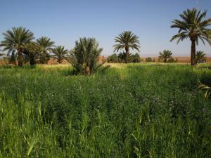 obrázek - Sahara Source Vie