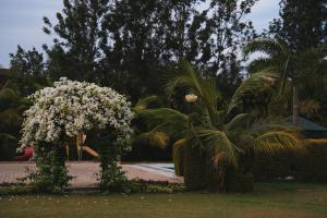 Coco Nest Resort
