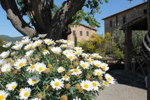 Casa Di Campagna In Toscana, Загородные дома  Совичилле - big - 104