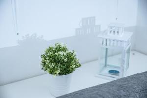 Aeolian Salina Apartments, Appartamenti  Malfa - big - 19