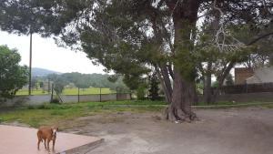 Vila Boya