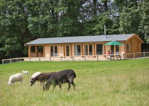 Peckmoor Farm Lodges, Nyaralók  Misterton - big - 3