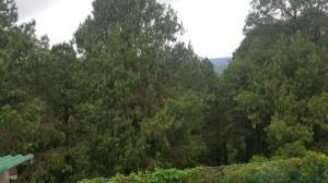 Jungle Front Bungalow, Chaty  Nuwara Eliya - big - 6