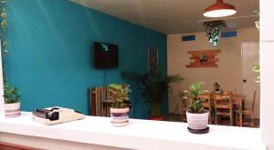 Casa Albaka Floresta, Vendégházak  Medellín - big - 32