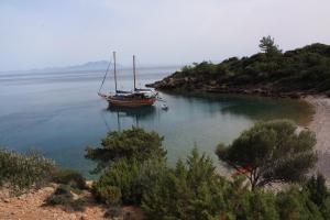 Amazing Blue Voyage