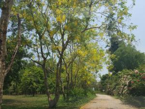 Saiyai Resort