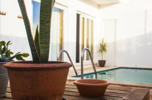 A Casa Do Sol, Проживание в семье  Вила-Нова-де-Мильфонт - big - 16