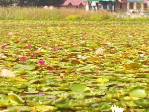 City Of Kashmir, Отели  Сринагар - big - 42