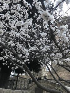 Хостел Баку на улице Геср