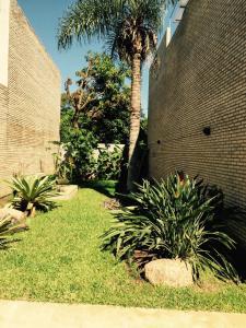 Madre Natura, Apartments  Asuncion - big - 2