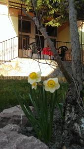 Cseresznyés Ház