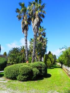 Villa Eleonora, Vily  Tropea - big - 81