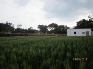 5 Bedroom Bungalow near Mahabaleshwar, Maharashtra, Villen  Mahabaleshwar - big - 20