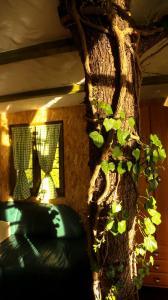 Japodska Treehouse - фото 4