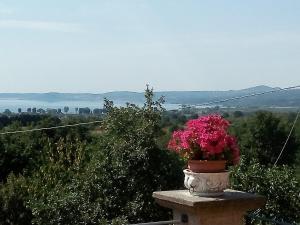 Casa Vacanze Paradiso, Holiday homes  San Lorenzo Nuovo - big - 28