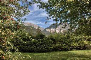 Alexander Mountain-Lodge, Prázdninové domy  San Vigilio Di Marebbe - big - 18