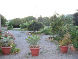 Pensión Las Tres Golondrinas, Гостевые дома  Пляж Эс-Фигераль - big - 29