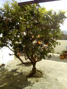 Estoril House Family.  Mynd 6