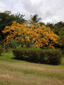 Luquillo Lodge, Лоджи  San Vicente - big - 16
