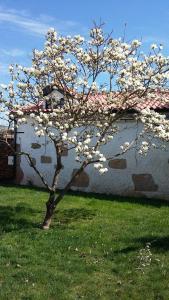 Casa da Quinta De S. Martinho, Pensionen  Vila Real - big - 82