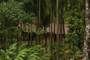 Aroha's Eco Hill Resort