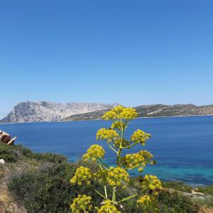 obrázek - Casa Mare Sardegna Cavallo