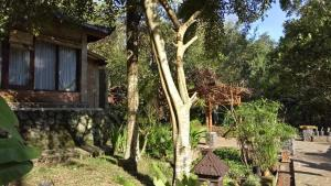 Mi Casa Ijen Guest House, Гостевые дома  Licin - big - 20