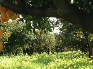 B&B Apricot