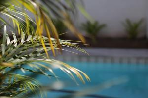 obrázek - Pool Party Hostel