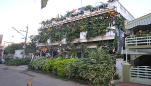 Vertical Garden Hostel