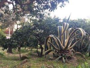 Гостевой дом Мандариновый сад - фото 8