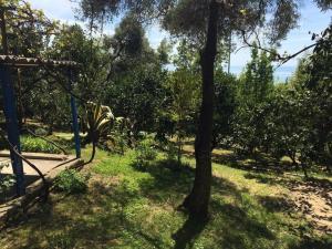 Гостевой дом Мандариновый сад - фото 4