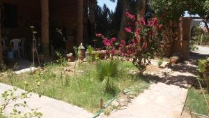 Camping Auberge Aain Nakhla, Хостелы  Guelmim - big - 30