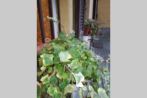 L'Edera- Loreto, Ferienwohnungen  Mailand - big - 33
