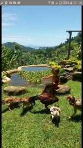 Casa do Capoeira Paraty, Ubytování v soukromí  Paraty - big - 23