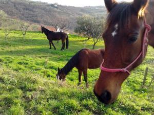Na kmetiji s konji Pogelšek