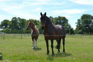 Flaxton Manor Farm Stay, Дома для отпуска  Rangiora - big - 7