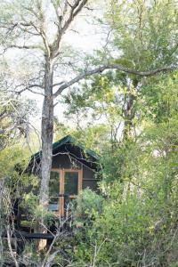 Ndzhaka Tented Camp, Luxury tents  Manyeleti Game Reserve - big - 12