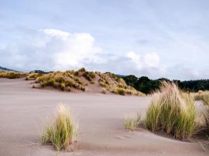 Mendocino Dunes - Dune Flower, Prázdninové domy  Fort Bragg - big - 6