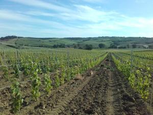 Agriturismo da Remo, Farmy  Magliano in Toscana - big - 8