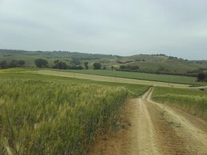 Agriturismo da Remo, Farmy  Magliano in Toscana - big - 27