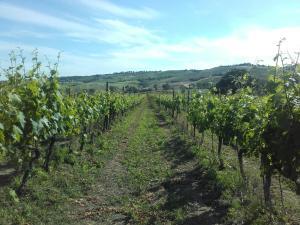Agriturismo da Remo, Farmy  Magliano in Toscana - big - 31