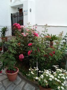 Sofia's Garden Studios