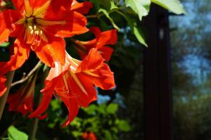 Villa Lily of Budva, Vily  Budva - big - 50