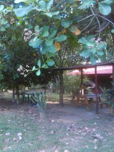 Cabinas Palmeras Lodge