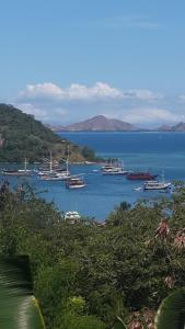 Pesona Restorant and Room, Affittacamere  Labuan Bajo - big - 1