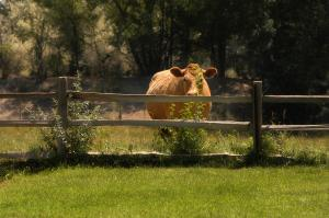 Willow Pond Bed and Breakfast, Bed and Breakfasts  Grand Junction - big - 21