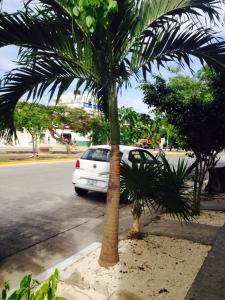Mi Casita Playa del Carmen, Ferienwohnungen  Playa del Carmen - big - 20